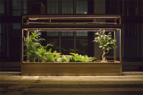 noraleah:  winesburgohio:  Plant-in City is an architectural installation that translates the environmental data of plants — changes in soil moisture, humidity, temperature, and other natural cycles — into an ongoing cycle of ambient sounds and visuals. I wouldn't hate having one of these in my home.   That miniature tree on the right — beautiful. (Click through to support their Kickstarter project.)