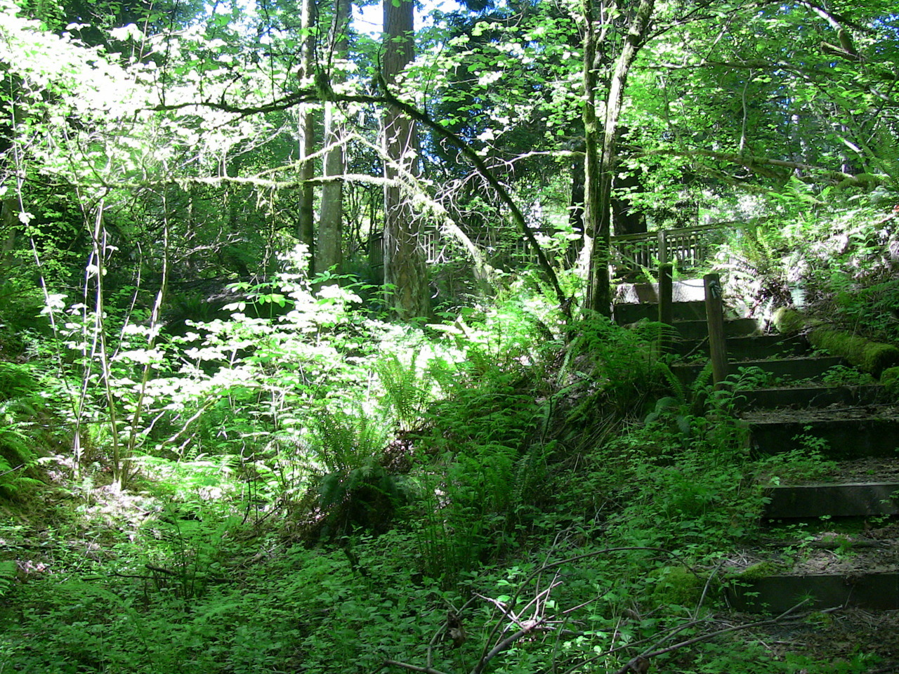 Overgrown stairway in the closed Berry Botanical Garden.