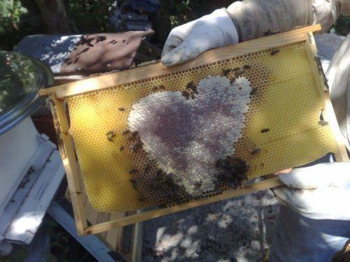 HONEYLOVE <3 [photo via Angela Giorg]