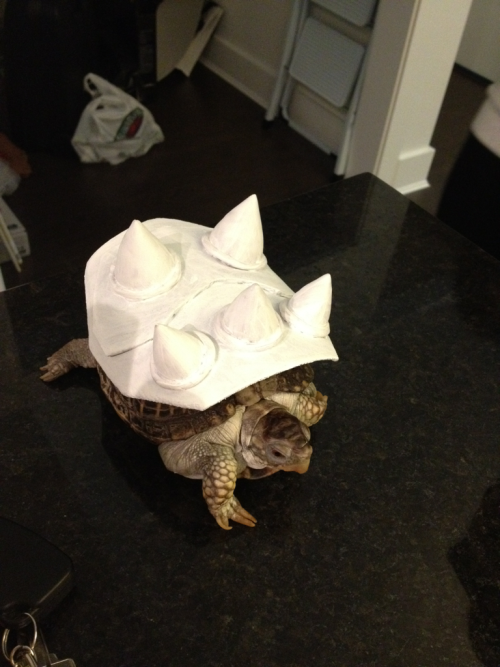 crosswhenwegetthere:  This is Koopa. Jessie's pet turtle.  Makes sense.