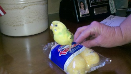 It's a twinkie with a Twinkie!