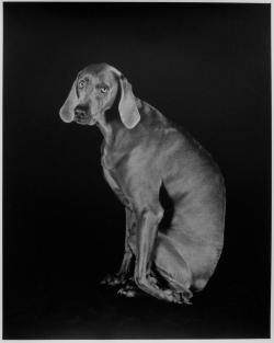 William Wegman Dog Leg, 1994 Silver gelatin print