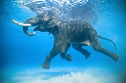 Even elephants love to go swimming in the ocean during summer(; I wonder if its a picses????