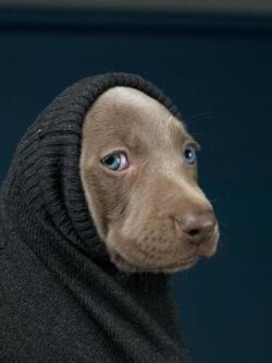 William Wegman 2012