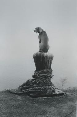 William Wegman Look Out, 1997