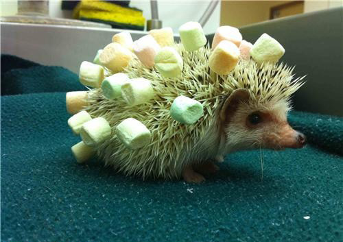 Cocktail hedgehog. Put cheese on it and use it at parties.