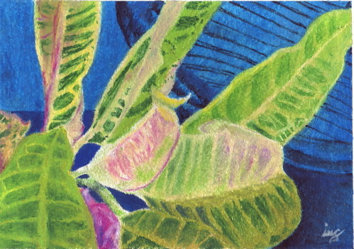 """Blue Croton"" on 9"" x 12"" watercolor paper, image size slightly smaller. Used Gallery Artists' Soft Oil Pastels by Mungyo. I think it's my best work! That's my peacock chair in the background."