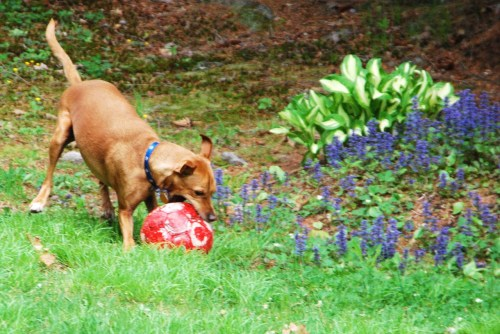 Gee these flowers are ni- OH YAH BALL