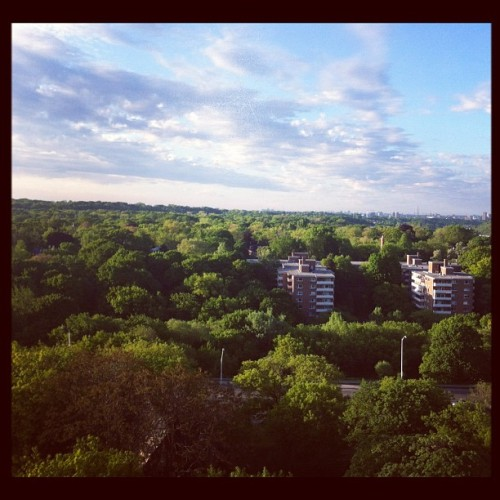 My incredible view. #outside #hangout #summer #balcony #toronto #igtoronto #igers #ignation #igcanada #view #trees #green #skyline  (Taken with instagram)