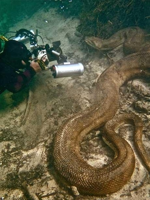 Why The Fuck would you stay in the water with a anaconda?!!!