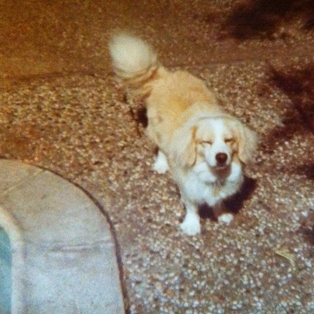 Barney The Dog, Late '70s, Houston, Texas