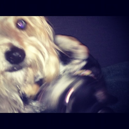 Puppy playtime!  (Taken with instagram)