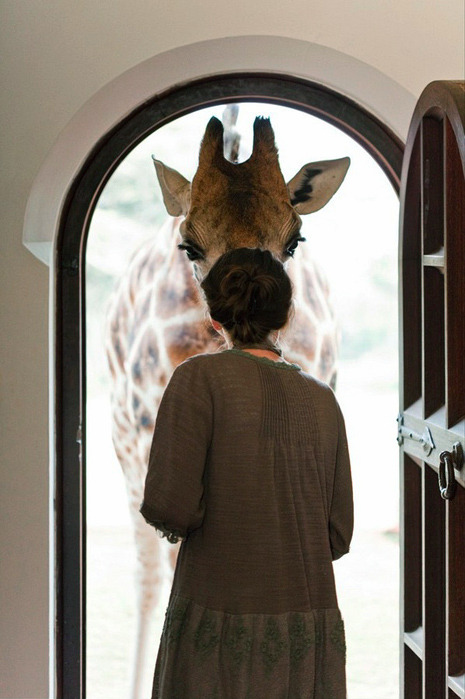 nevver:  Knock, knock.  i would be ecstatic if a giraffe came knocking on my door lol
