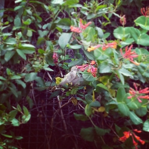 Hummingbird at REI (Taken with Instagram at Portland, OR)
