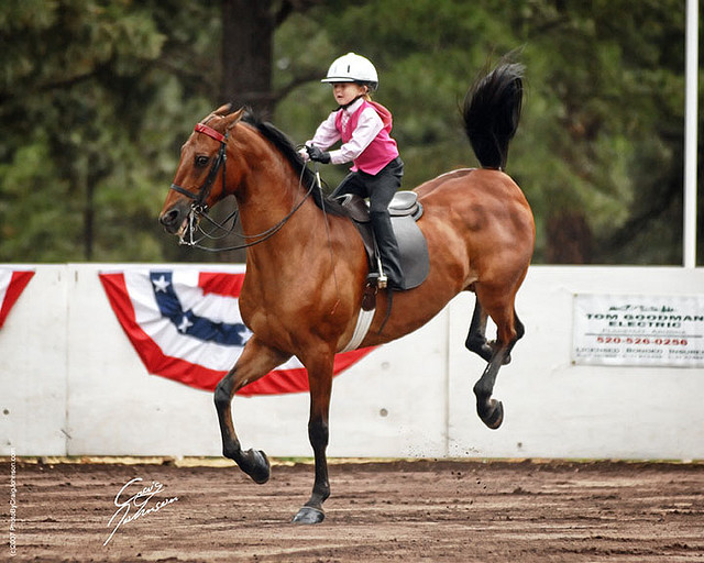paduwieventingblog:  classy-equine:  vintagexequestrian:  little girl on a saddlebred! She must seriously be talented to use a double bridle at such a young age …  (via imgTumble) most people who use double bridles don't even need them, most showies just do it for looks, and don't in fact, know how to use them…