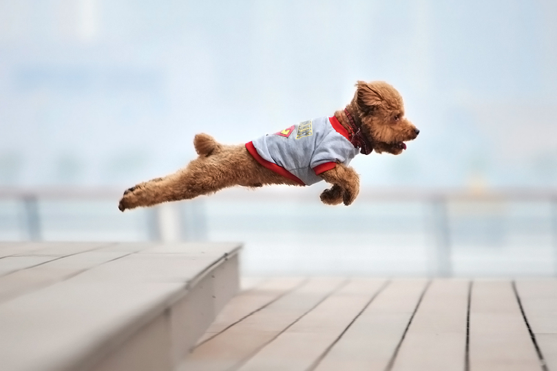 vvolare:  Super Dog by Tianhang Zhang