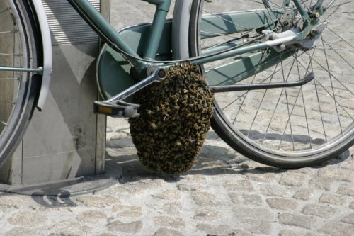 Bee Hive on Bike The bad news is you can't bike home. The good news: free honey.