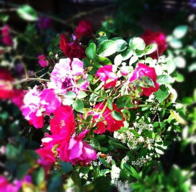 Fleurs, in my backyard. It's sunny here, with the breeze moderating temperature, and I'm trying to ignore the pastorality of it all as I head inside to  practice.