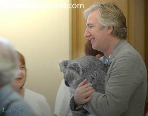 erosapollo:  baracudaboy:  mithranda:  Alan Rickman holding a Koala. Every argument is invalid.  my dash is being amazing right now  THIS IS GLORIOUS