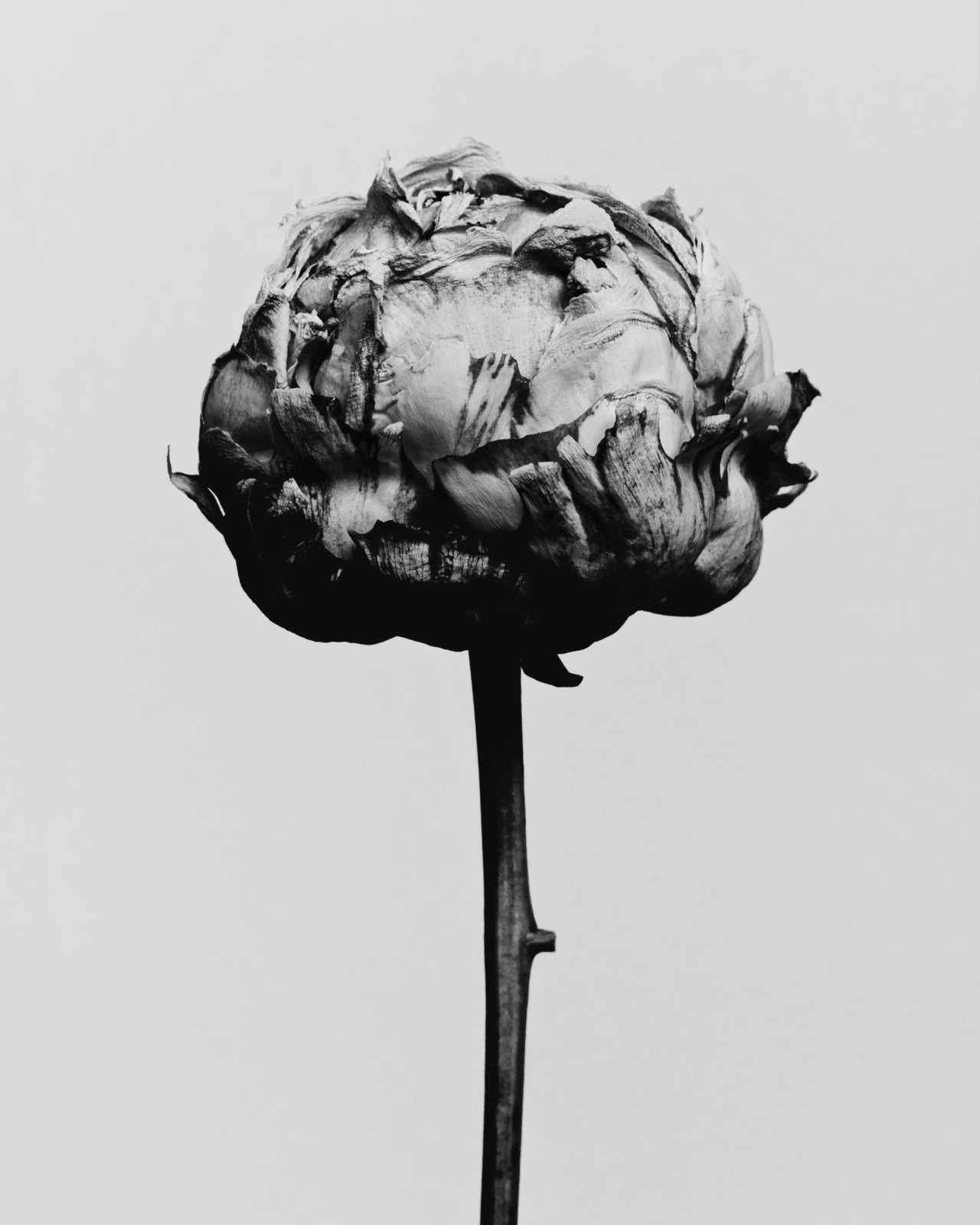Decaying flower was shot by Billy Kidd. (via billykidd)
