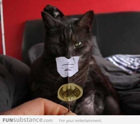 funsubstancecom:  I am Batman More funny pics at FunSubstance.com and the Facebook Page