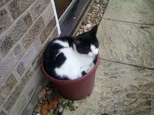 getoutoftherecat:  get out of there cat. you are not a plant. you do not have roots that let you grow taller.  Wow he looks so much like my Ziggy!