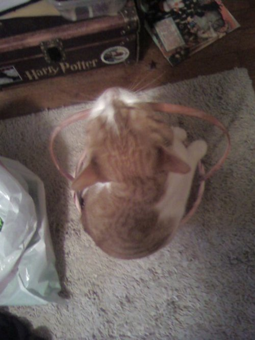 get out of there cat. you are not an easter egg.