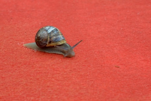 zodiacbaby:  divisibilities:  Snail on the Cannes Red Carpet  me