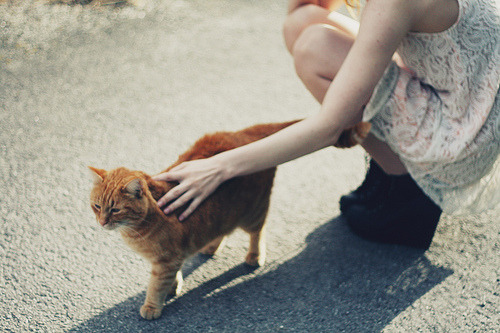 toastistoast:  (by nikolinelr)