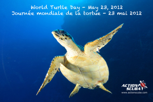 May 23 is World Turtle Day, and we LOVE turtles. (just check our our logo!) So, let's all talk a moment to enjoy a relaxing dive with a turtle with this video shot on our recent trip to Little Cayman.   We're going back to Little Cayman, where we see turtles on EVERY dive, in July 2013 so be sure to save the date to join us! Or join us on one of our many other dive trips to dive with these amazing creatures. Check out the video here