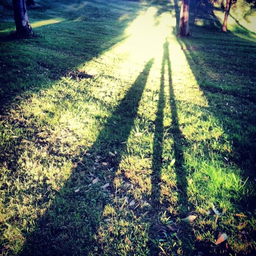 Afternoon walks with my #dog. #shadow #light #grass #sun (Taken with instagram)