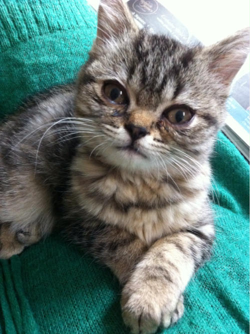 This is our new little kitty called mackerel…beautiful as she is she is preventing me from any stitching or crochet at the moment!! :)
