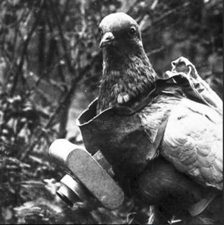 bombo:  Camera pigeon: 1903   Today's version of a spy drone would cost in the $$$ millions.