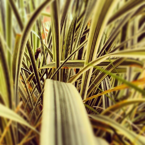 """Caminos"" #plants #colors #nature #outdoor  (Tomada con instagram)"