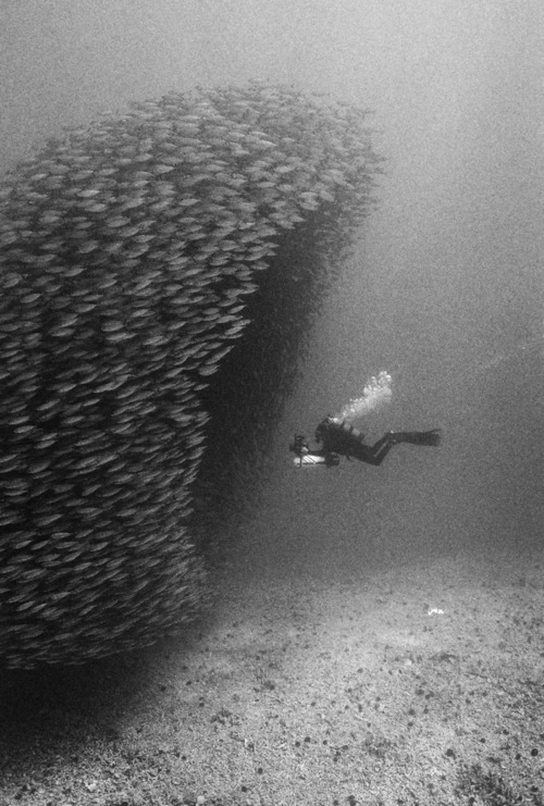 Entering a School of Fish(original source unknown)