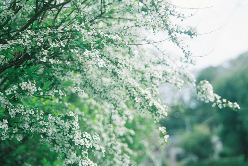 hhearts:  2012 spring kamakura by ryo522 on Flickr.