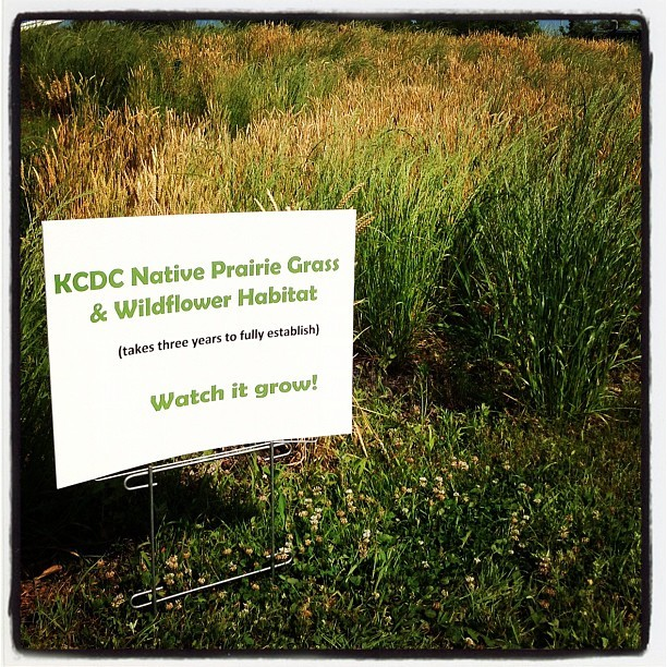 Kansas Native Prairie Grass & Wildflower Habitat @kansasdiscovery #topeka #kansas (Taken with instagram)