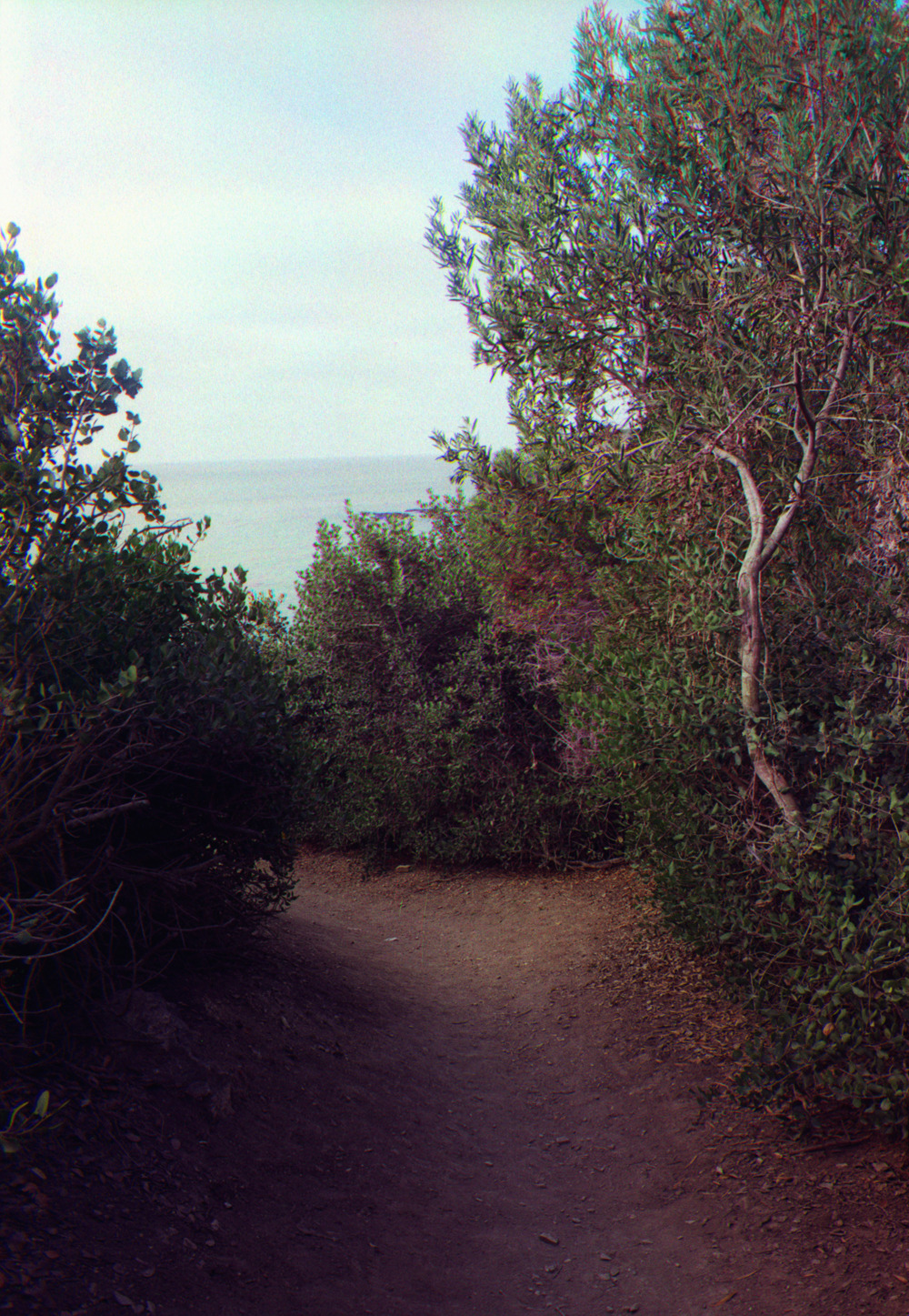 Path to shore