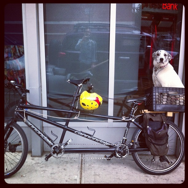 Gone for a ride ! 🚲 #bicycle #dog #newyork #williamsburg #brookyn #bedfordavenue  (Taken with instagram)