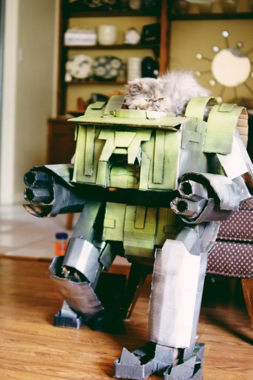 "collegehumor:  Cat in Cardboard Mech Suit ""With your puny weapons it's impossible to take me-owt'"
