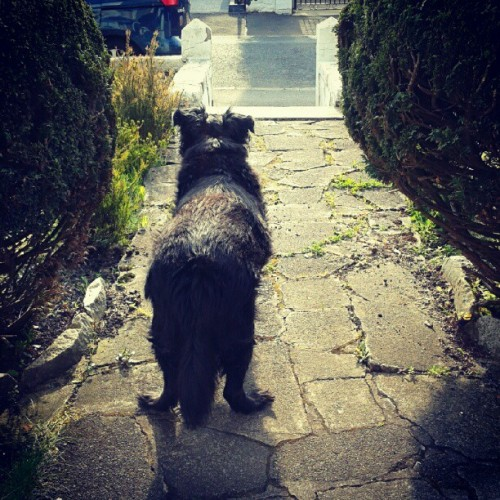Thoughtful doggy :) (Taken with instagram)