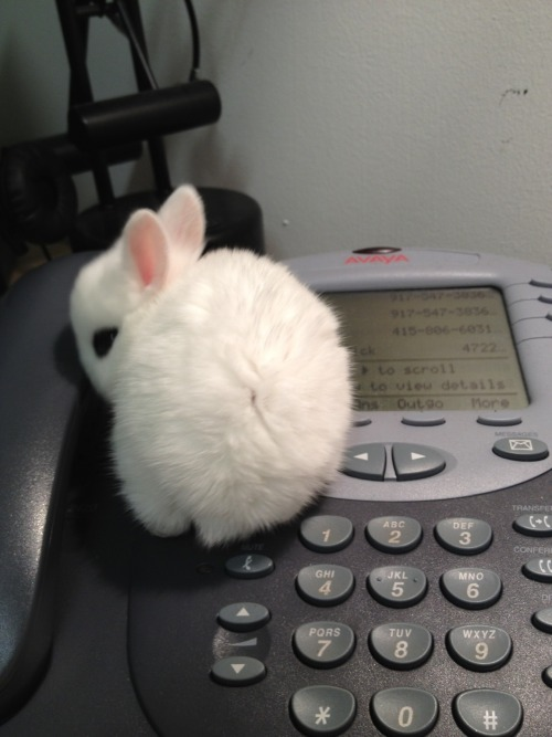 sheepiness:  coconotchanel:  HELLO?!!? is it ME you're looking for??  YES YES IT IS