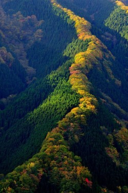 keepcalmandtraveltheworld:  Tenkawa Mountain, Japan