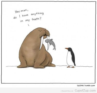 cupofzup:  Walrus Problems