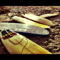 SUN! SEA! GIRLS! BOARDS! LETS DO THIS…
