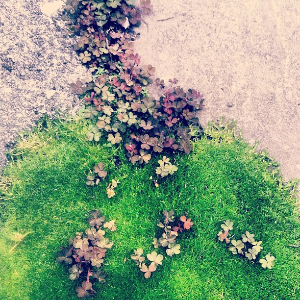 #oregon #portland #nature #moss #clover