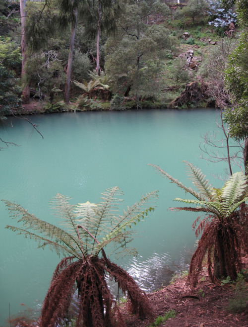 ecocides:  Blue Lake - New South Wales, Australia | image by Cimexus