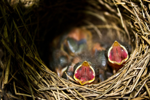forsakenphotos:  these baby birds were so fucking cute asdsdgghj