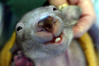 And a happy Wombat Wednesday to you too!