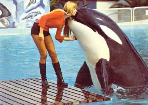 "ilovethewhales:  endkillerwhalecaptivity:  Calypso -Captured in 1969I came across a scientific paper where it says after capture she refused to eat so her pool was emptied and she was gagged and force fed every day for five weeks. Afterwards she had to be treated for ""nervous ticks"" (I wonder why).Calypso died just a year later.Photo courtesy of Orcahome.de   love the picture, hate the story. :("